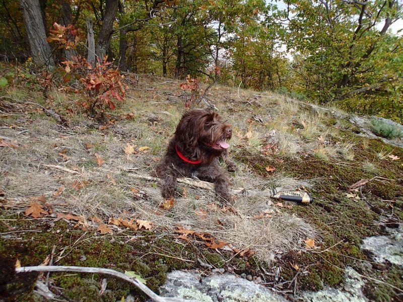 Adirondack-Bird-Dog-Tucker