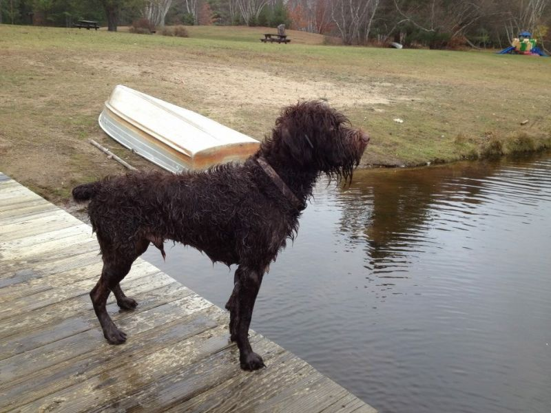 Tucker on Goose watch
