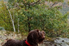 Adirondack-Bird-Dog-Tucker-2