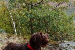 Adirondack-Bird-Dog-Tucker-2