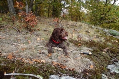 Adirondack-Bird-Dog-Tucker