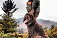 Adirondack-Bird-Hunt-Guide-web