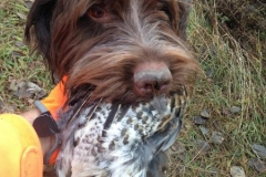 Tucker grouse retrieve 2016