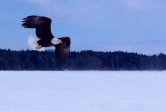 eagle upper saranac