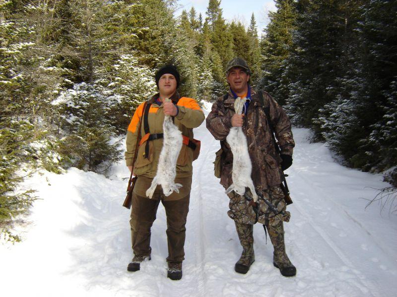 adirondack snowshoe hare 2