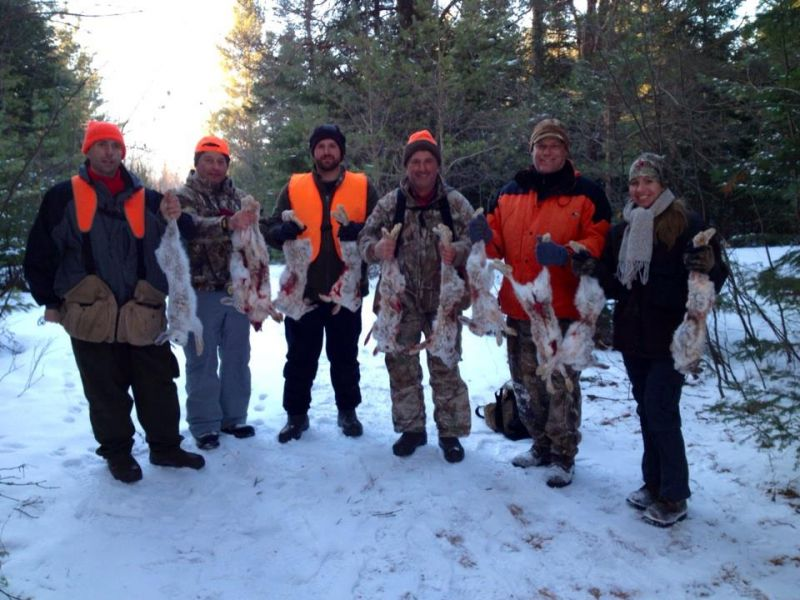 snow shoe hare group