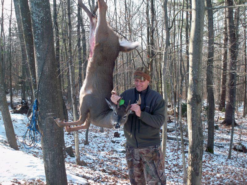 Adirondack-Deer